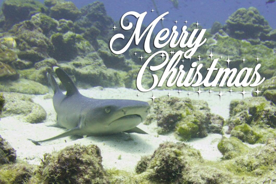 Happy Holidays from Bubbly Costa Rica