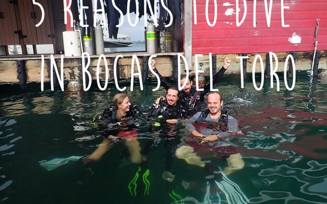 5 Reasons to scuba dive in Bocas Del Toro