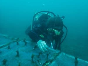 marine conservation costa rica
