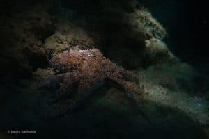 octopus in costa rica