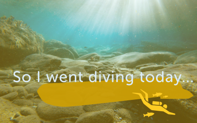 So I went diving today….